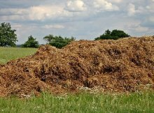The difference between compost and fertilizer
