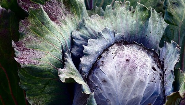 Vegetables you can grow in the winter