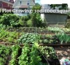 How to maximize garden yields with a crop plan