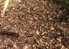 How to use wood chips correctly in your garden