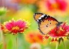 How to grow a butterfly garden