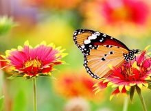How to grow a butterfly garden