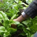 How to garden year-round