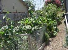 Urban Organic Gardener Story