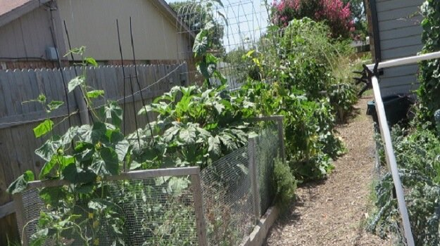 Texas Urban Organic Gardener Grows Just About Everything