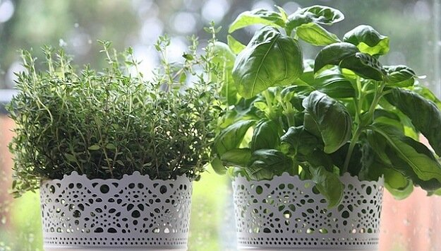 Indoor herb garden choices