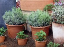 Common container gardening mistakes