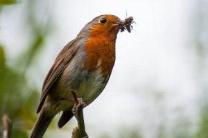 Feeding garden birds in winter