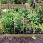 Setting vegetable gardening goals