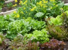How to grow a more sustainable garden