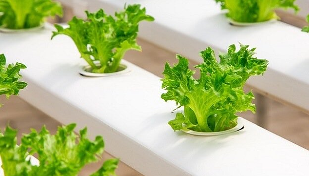 Introduction to hydroponics growing systems