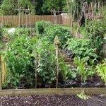 No-dig gardening video