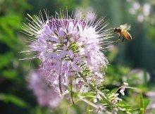 Attracting wild pollinators to your garden