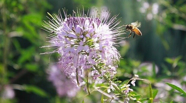 Attracting wild pollinators to your garden