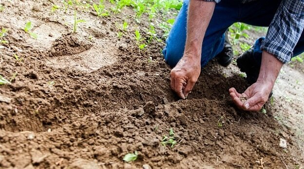 Determining when to plant in your area