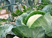 How to use plant rotation for a healthy organic garden