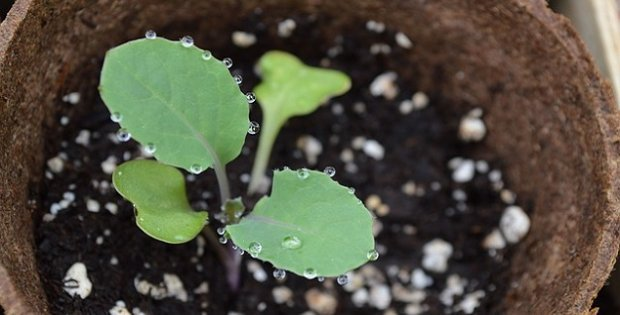Sustainable seed starting supplies