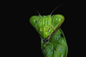 Good bugs vs. bad bugs in the garden