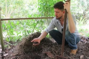 How to feed your garden soil for free