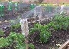 7 Gardening shortcuts to save time