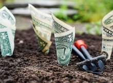Money-saving tips for organic gardeners