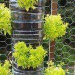 Small space and urban garden tips
