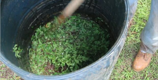 Simple DIY liquid fertilizer for the garden