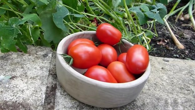 How to extend your summer garden harvest