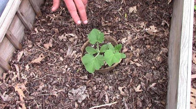 4 Common Garden Myths