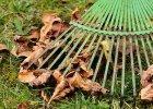 Fall garden tips for better soil