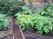 Sustainable gardening in harmony with nature