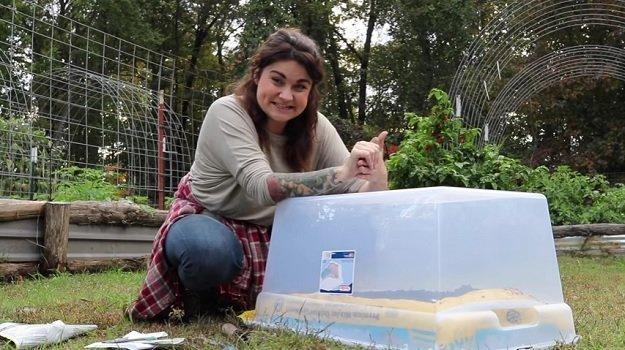 Winter salad greens mini greenhouse project