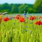 Seasonal garden guide