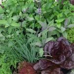 Herb Garden design ideas video