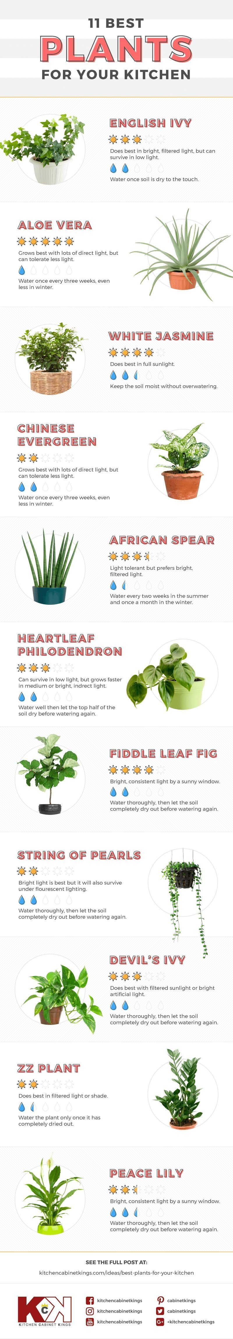 Best indoor houseplants