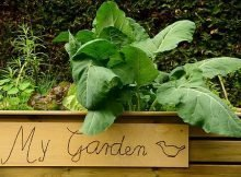 Tips for setting garden goals
