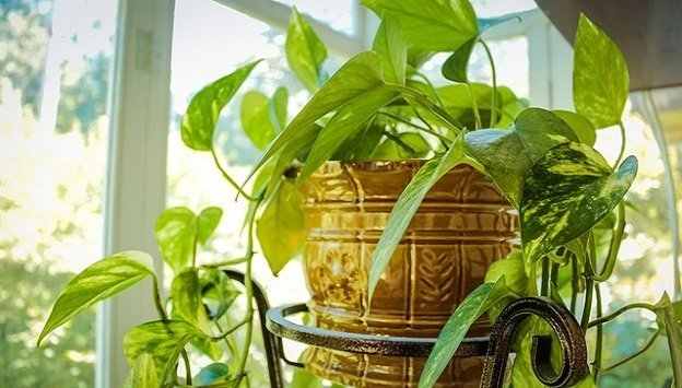 Best houseplants for the home