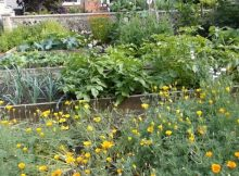10 tips for starting a vegetable garden