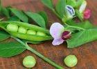 Easy veggies to grow from seed direct seeding