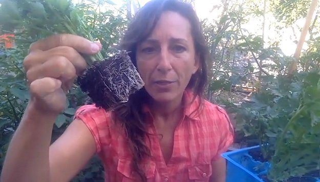 Tips for buying healthy seedlings