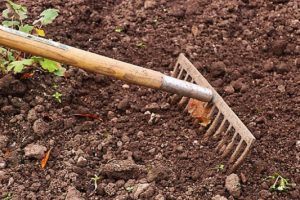 5 key components of healthy garden soil