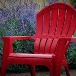 Xeriscape garden tips