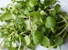 Extra hardy salad greens to grow in winter