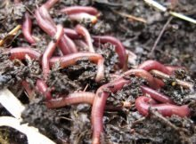 How to build a wormery