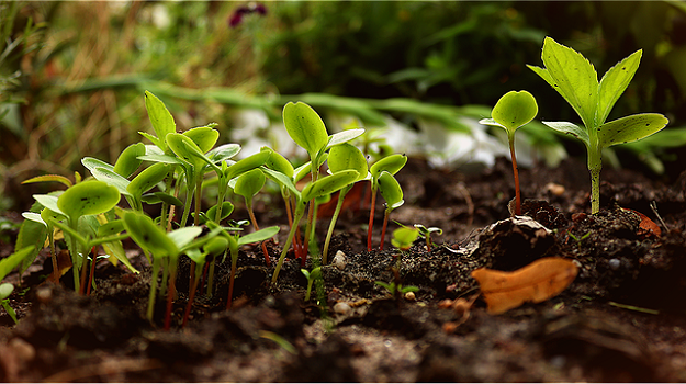 Common characteristics of permaculture gardens