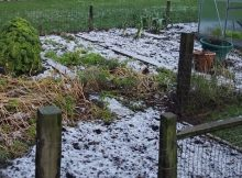 Protecting beneficial insects in the winter