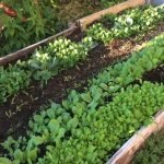 Maximizing your harvests with a garden plan