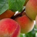 How to grow fruit trees from seed