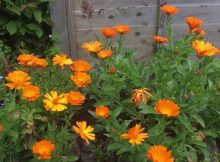 Growing wildflowers for bees & butterflies