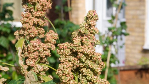 Growing Edible Seeds & Grains